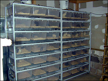 Rat breeder racks